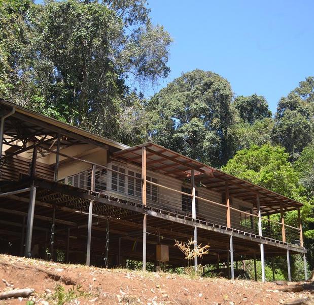 Riverfront rainforest privacy #2