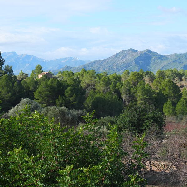 Star gazing in Catalunya... a romantic getaway amongst the olive groves #1