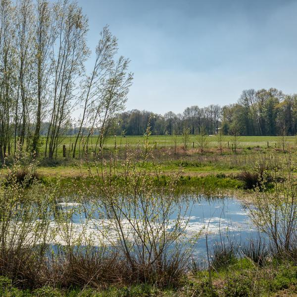 Grünland umgeben von Büschen a #3