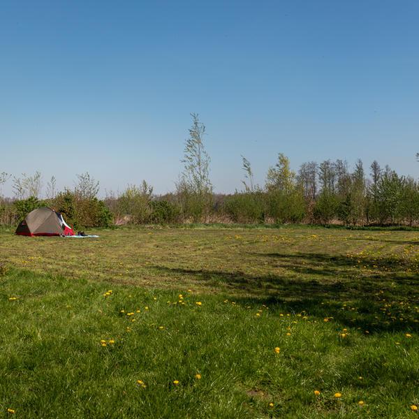 Grünland umgeben von Büschen a #4