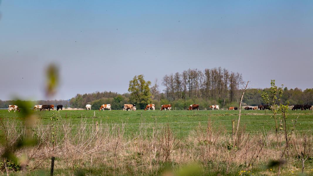 Grünland umgeben von Büschen a #8