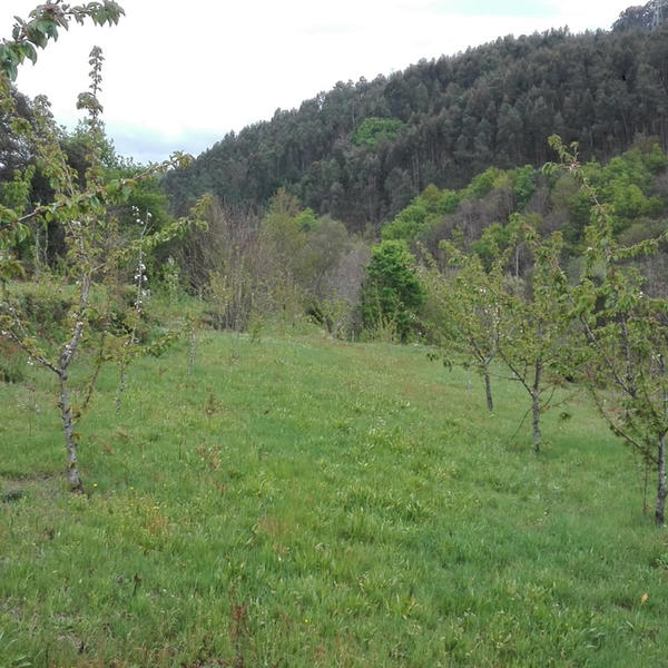 Quinta do Dindinho - Rural property surrounded by nature #3