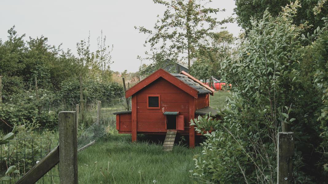 Öko-Camping in der Nähe von Wad und DarkSky-Park Lauwersoog #11