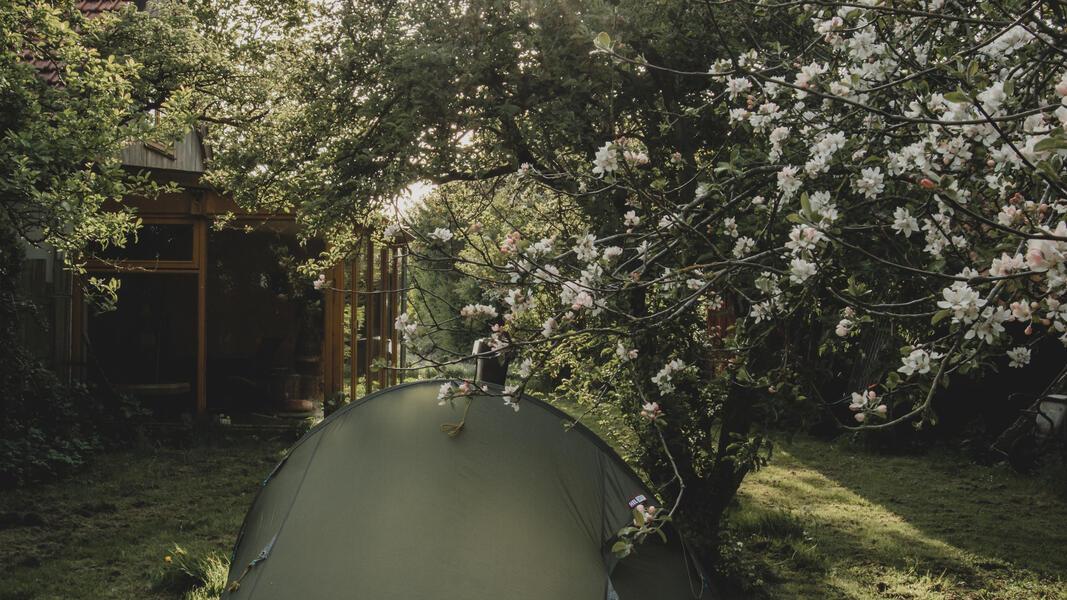 Öko-Camping in der Nähe von Wad und DarkSky-Park Lauwersoog #6