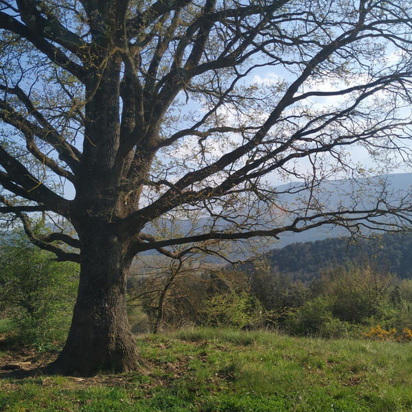 Vilabona Wildlife, near Mount Collsacabra #3