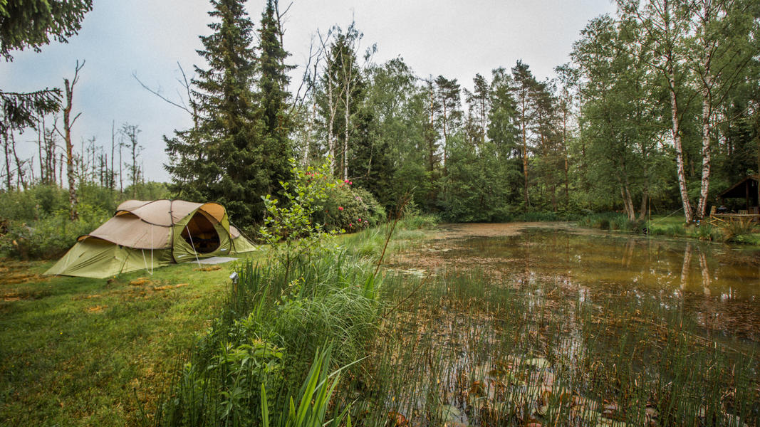 Tent In the middle of forest, next to pond #2