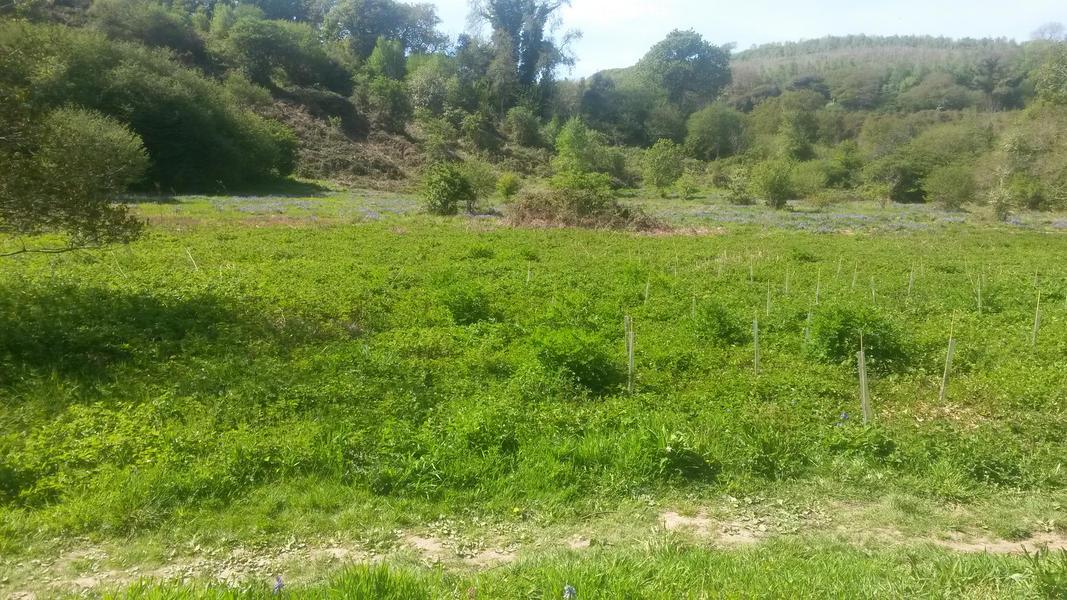 Silveridge Meadow #2