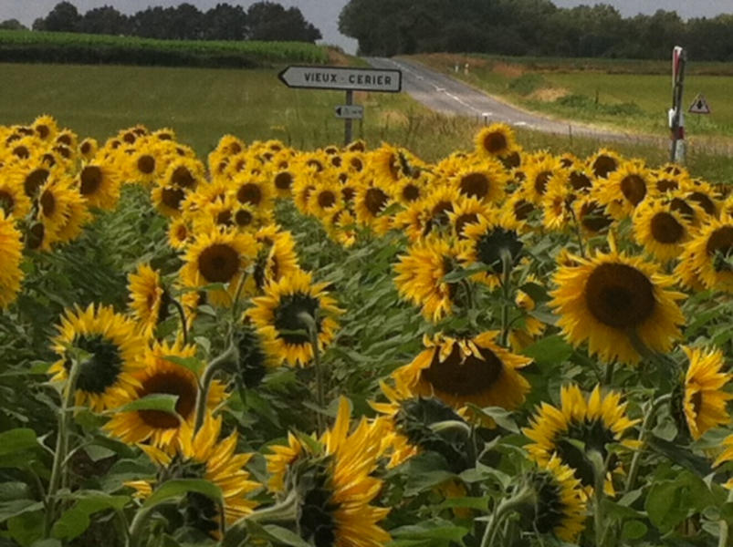 A Taste of Rural France in Charente #4