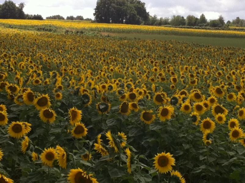 A Taste of Rural France in Charente #5