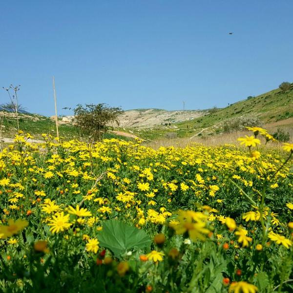 Sleeping in the Jordan nature #2