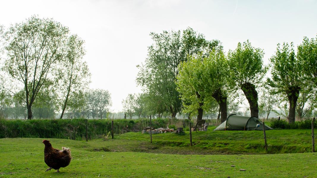 Cosy camper in nature #5