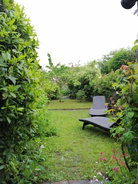 Small garden at the edge of the West Midlands #1