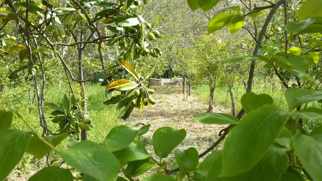 Hidden green valley in south Sicily #3