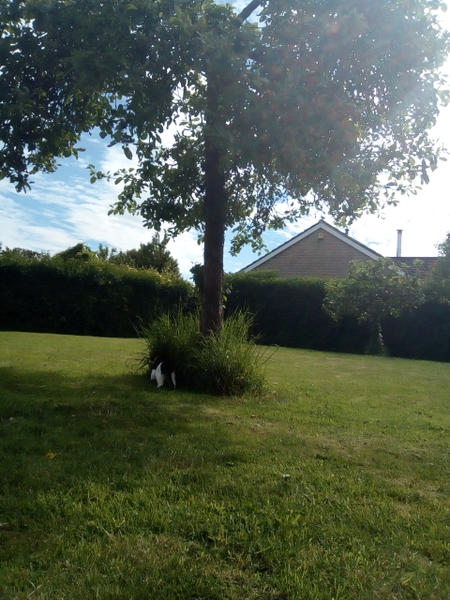 Quiet village location, camp in our back garden. Bell Tent Hire also available. #2