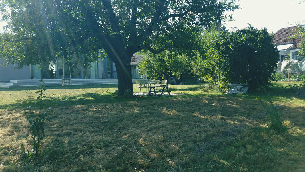 Sleep on the Cherry Tree (Blossom) Trail #3