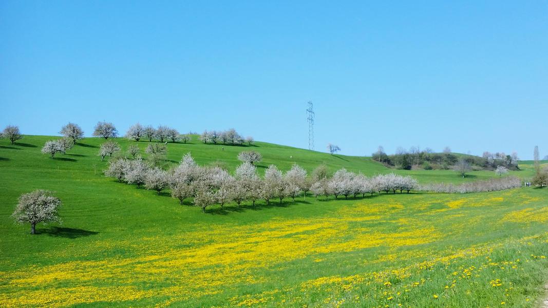 Sleep on the Cherry Tree (Blossom) Trail #4
