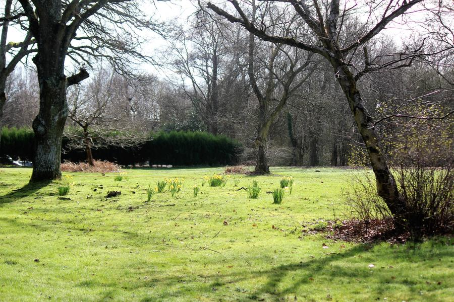 Come camping in our wonderful woodland Emma' glade. 10 minutes from the New Forest. #1