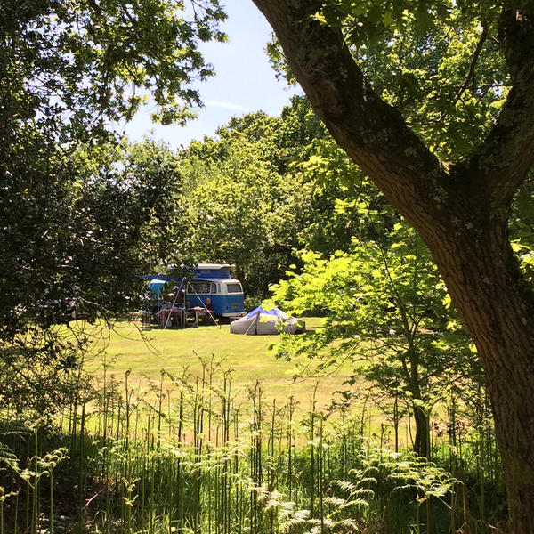 Come camping in our wonderful woodland Emma' glade. 10 minutes from the New Forest. #4