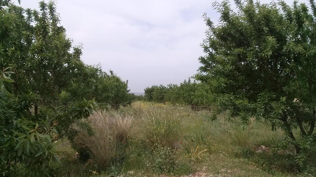 almond garden natural canping #4