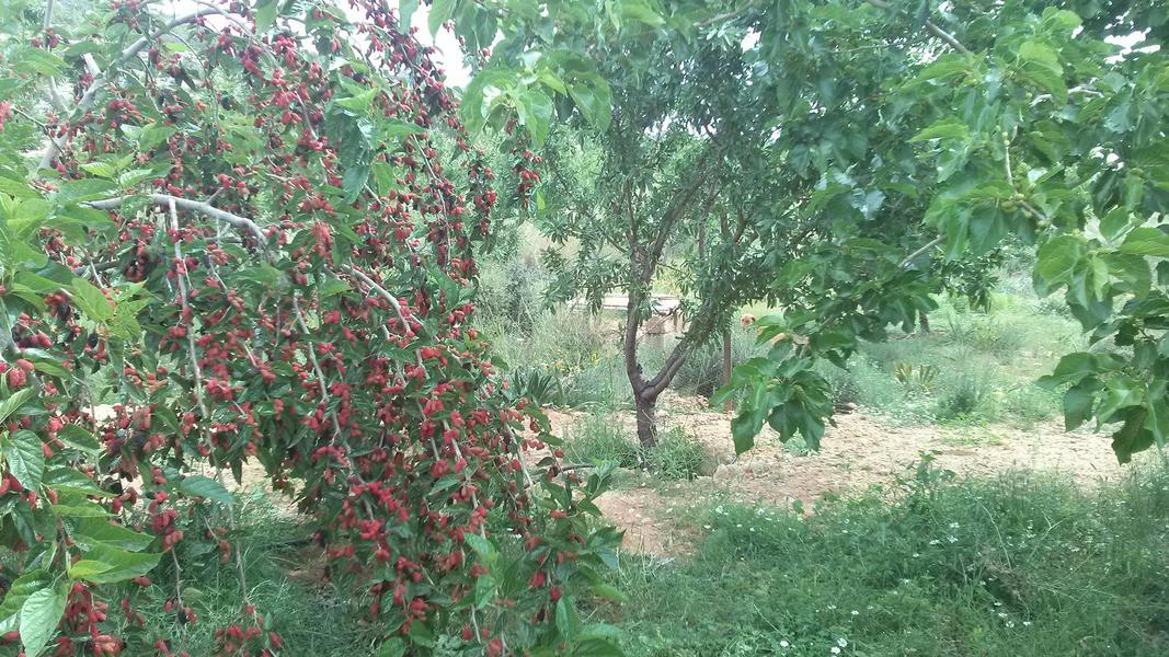 almond garden natural canping #5