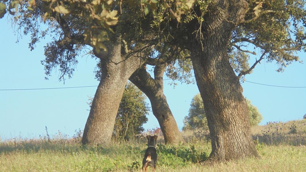 Cerca dos Sobreiros, where you can talk and hear the trees, animals, and sky. #10