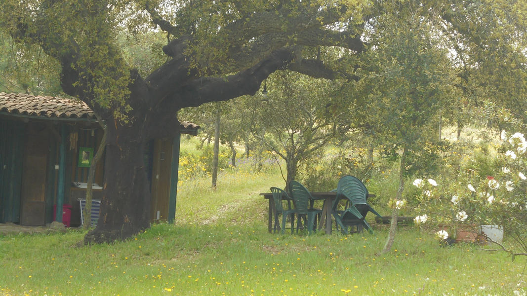 Cerca dos Sobreiros, where you can talk and hear the trees, animals, and sky. #5