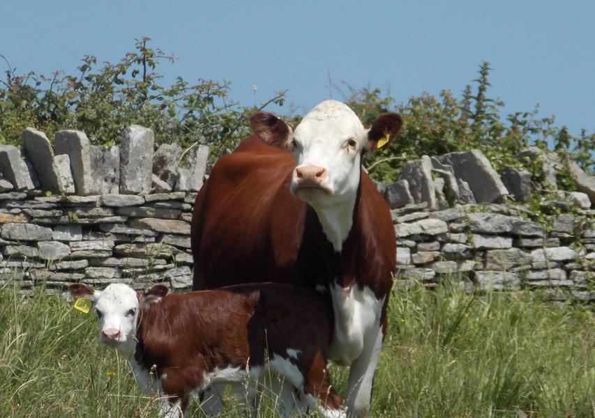 Knaveswell Farm Glamping #6