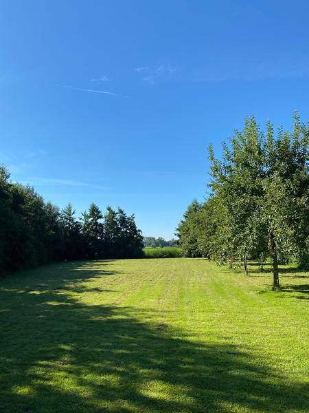 Ruim veld tussen de weilanden net buiten leeuwarden #1