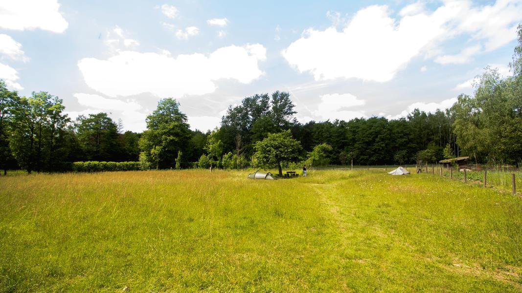 Idyllic campsite near the forest #7