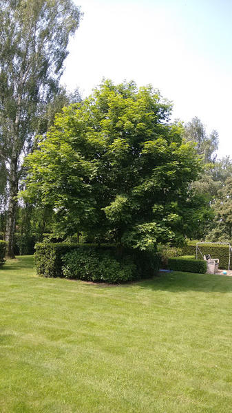 beautiful garden in a quiet village not far from Bruges; beautiful nature #8