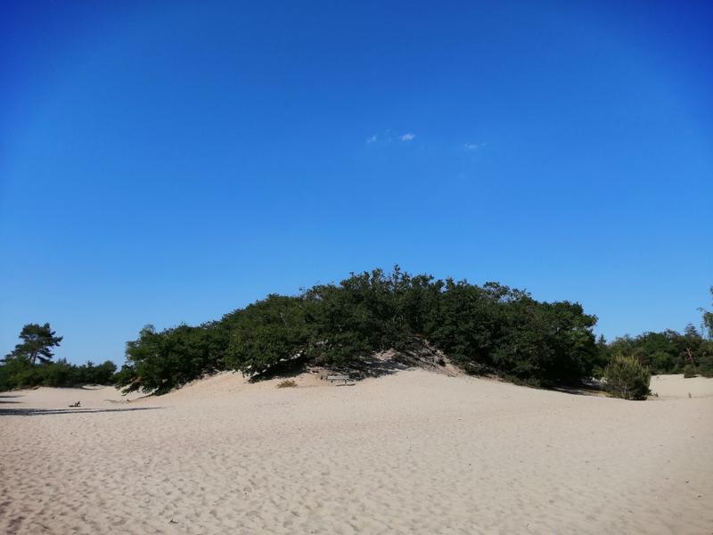 Off-grid - Ecobobo on the edge of the Loonse- en Drunense Duinen (DW) nature park #10