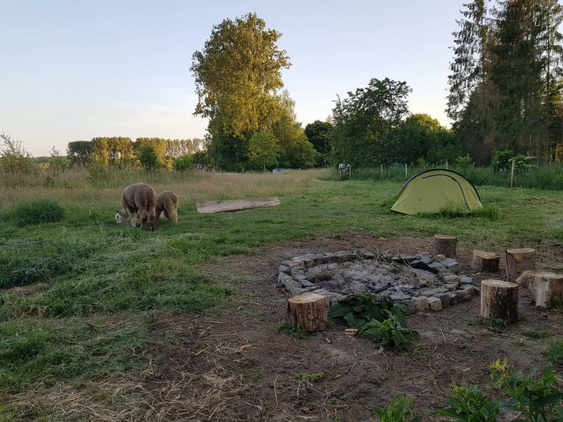 Heerlijk kamperen vlak bij onze Alpaca's in een rustige omgeving. #4
