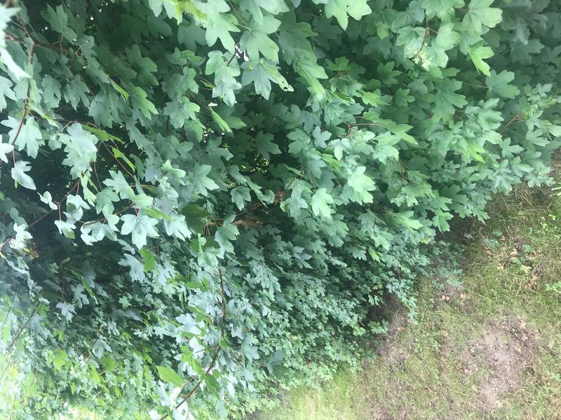 Leuke tuin in de Kempische natuur vlakbij Turnhout, Kasterlee en Herentals #4