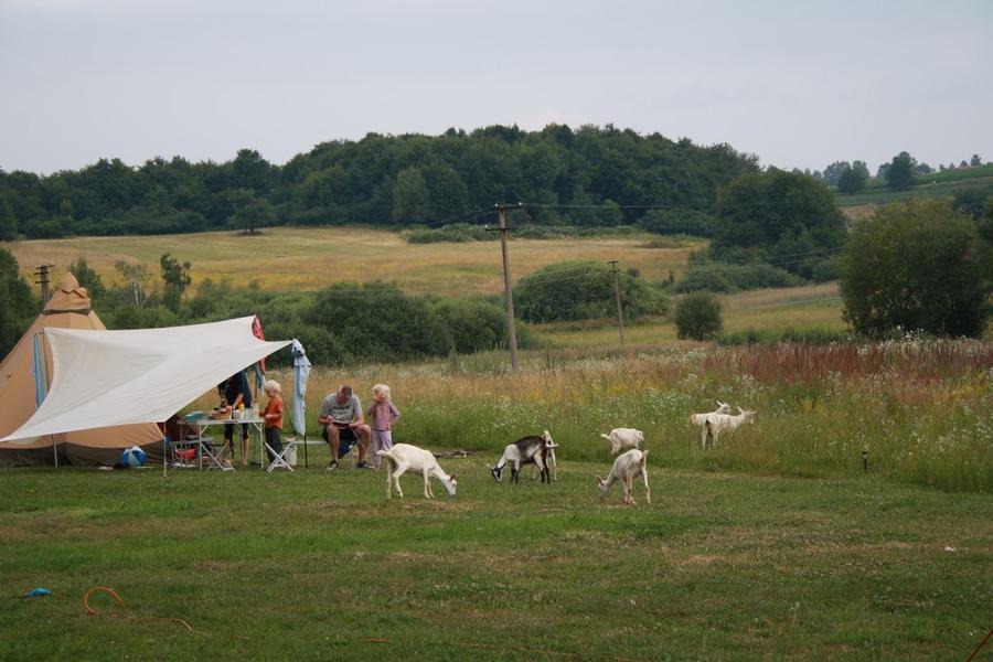 Farm & Camping Lazy #10