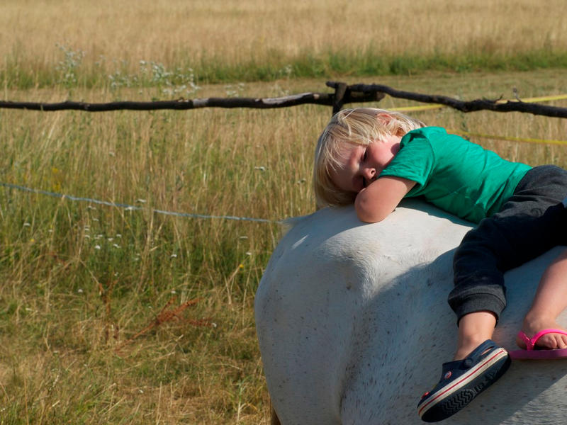 Farm & Camping Lazy #13