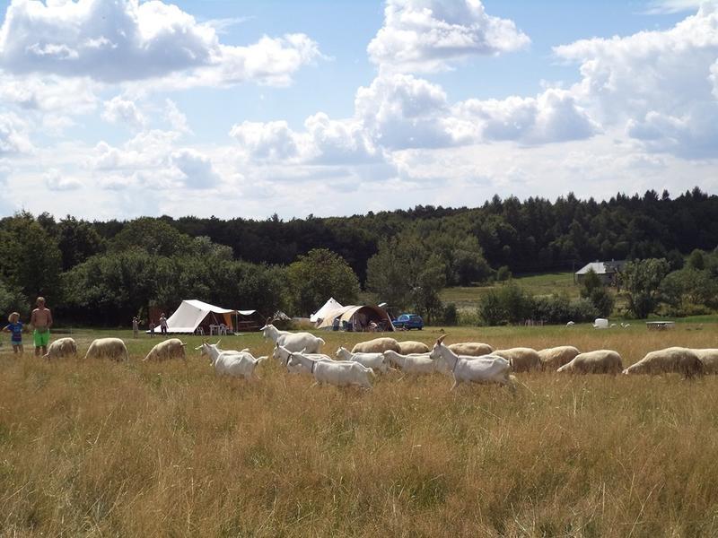 Farm & Camping Lazy #1