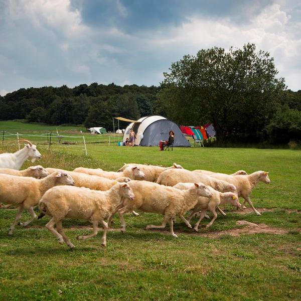 Farm & Camping Lazy #4