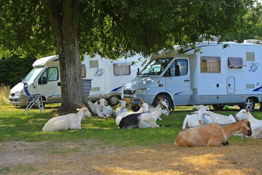 Farm & Camping Lazy #9
