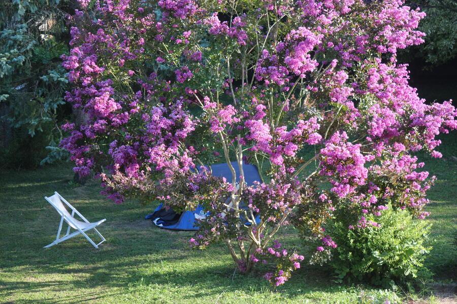 jardin en prairie légérement ombragé au bord du Rhône en Savoie. #1