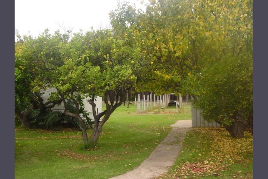 The Bark Mill Vineyard #1