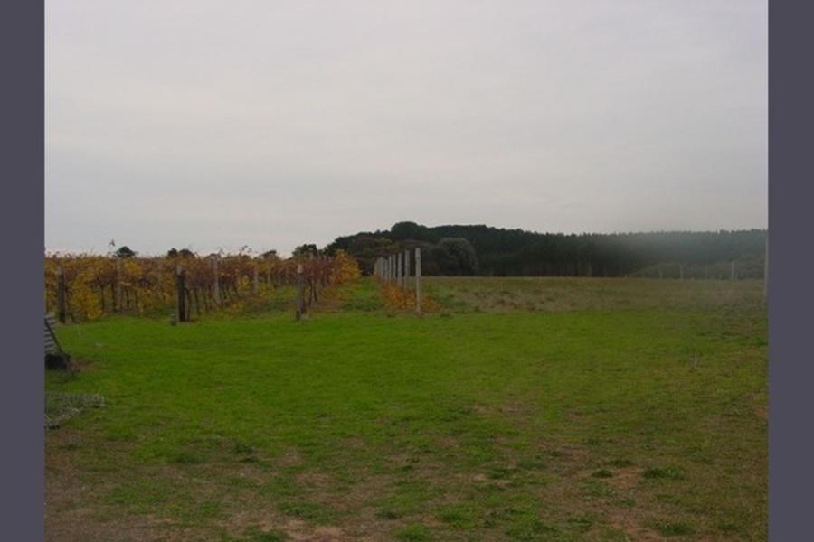 The Bark Mill Vineyard #5