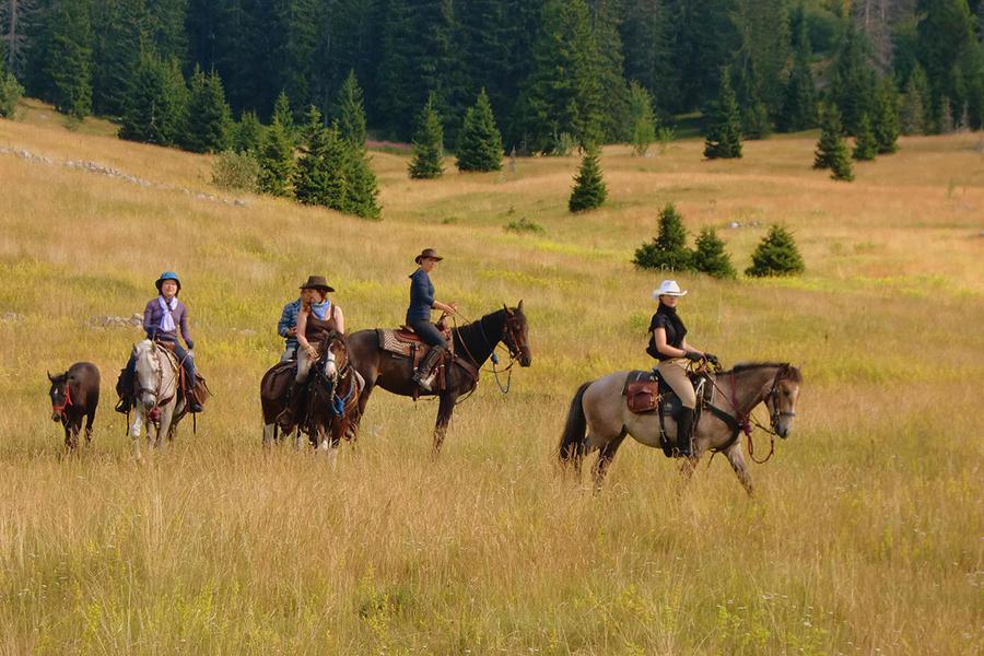 Linden Tree Retreat & Ranch #2