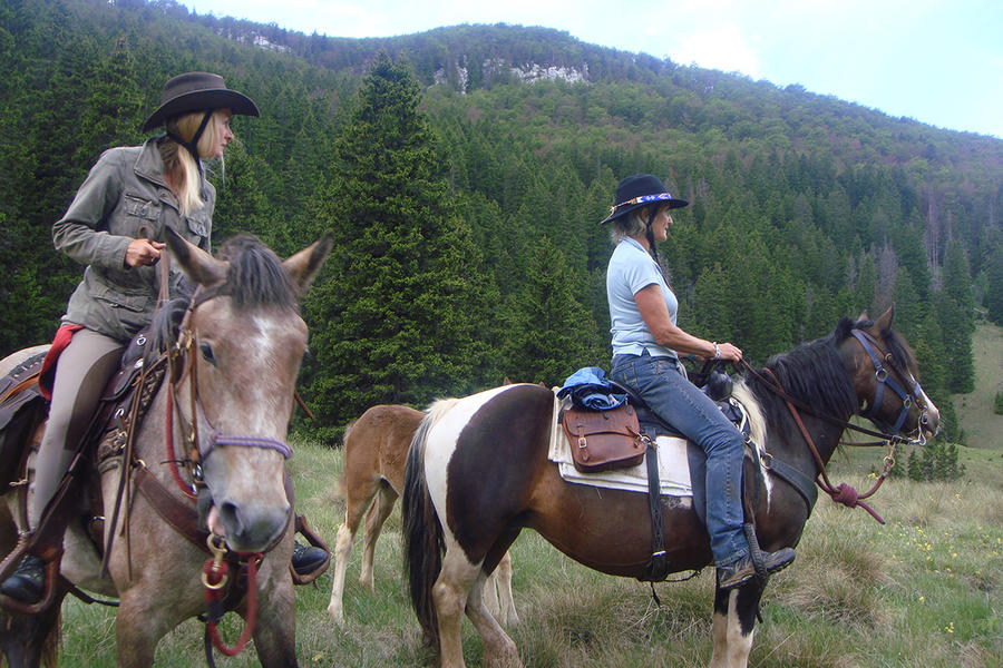 Linden Tree Retreat & Ranch #3