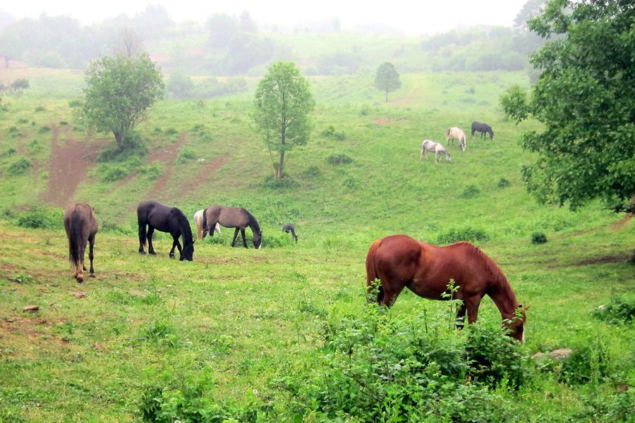 Linden Tree Retreat & Ranch #4