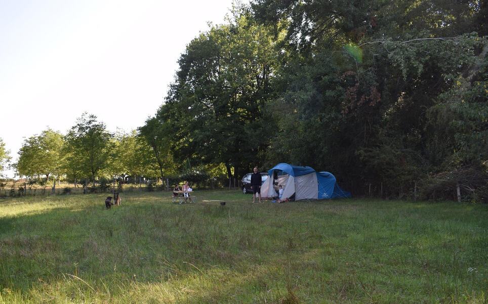 Walnuttreeorchids and ornamental gardens to pitch your tent or caravan #2