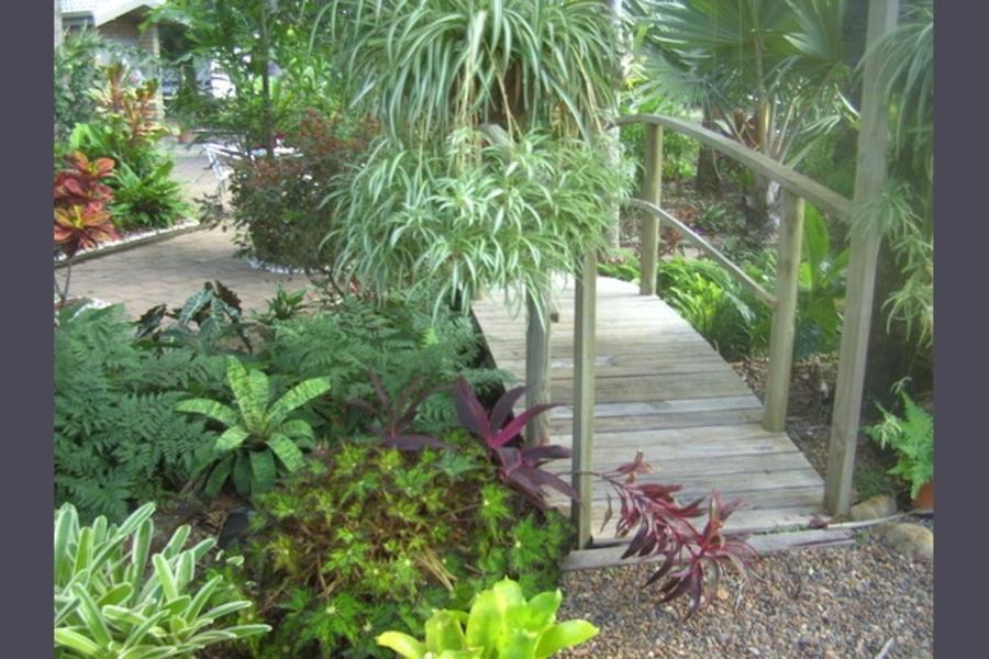 Whispering Palms #1