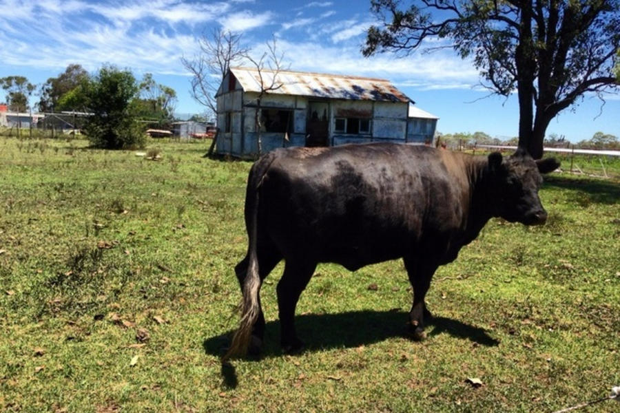 Country Acreage in South West Sydney #2