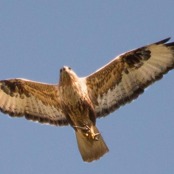 Discover the wildlife of Jordan #2
