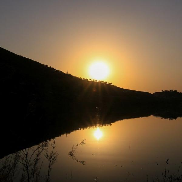 Discover the wildlife of Jordan #3