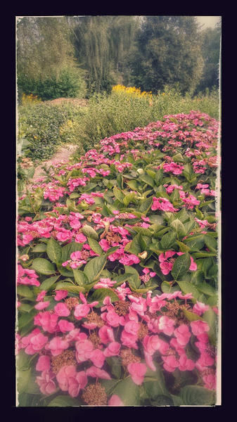 prachtige tuin in rustig dorp niet ver van Brugge; mooie natuur #3
